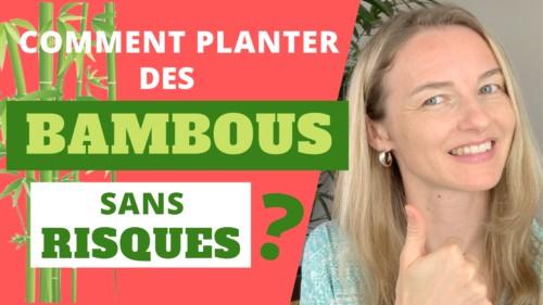 Comment planter des bambous sans risque ?