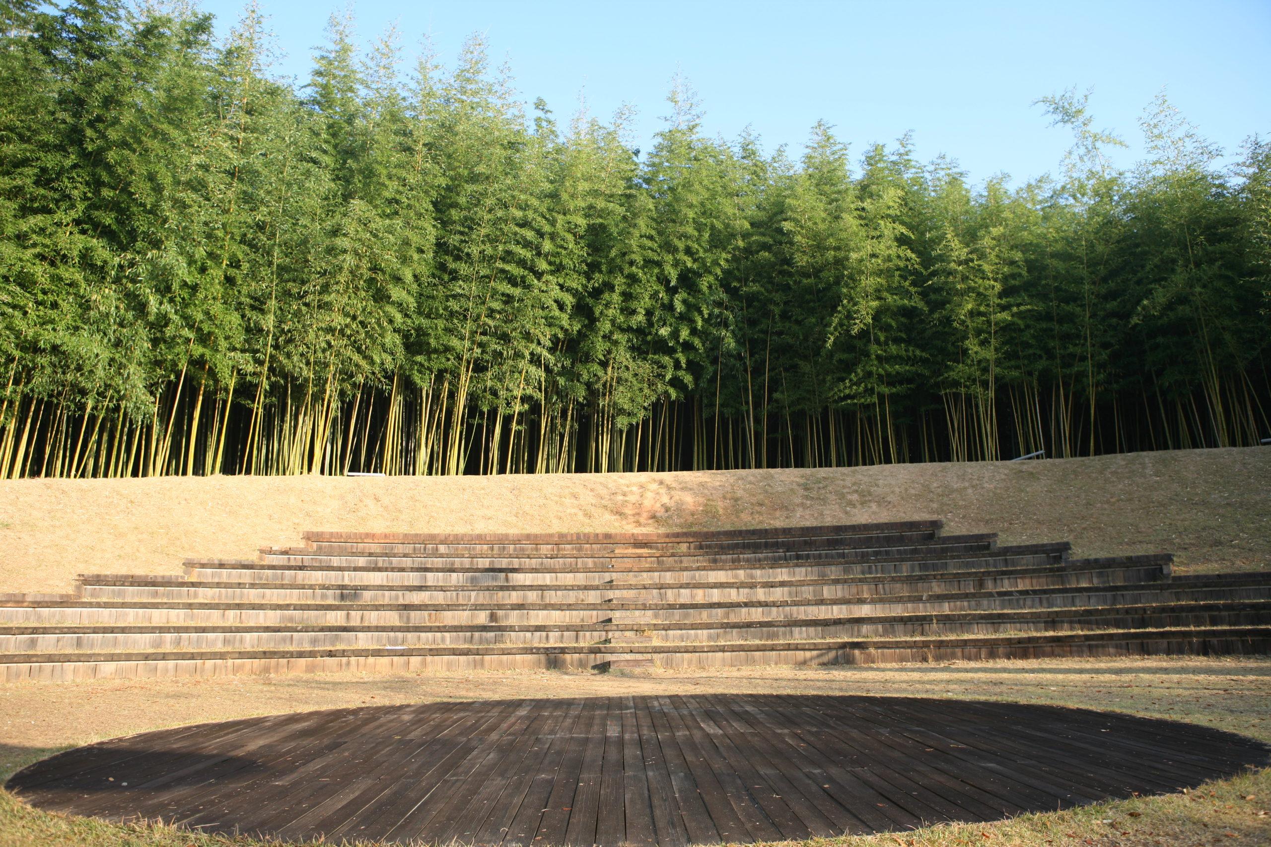 haie de bambous dans le jardin