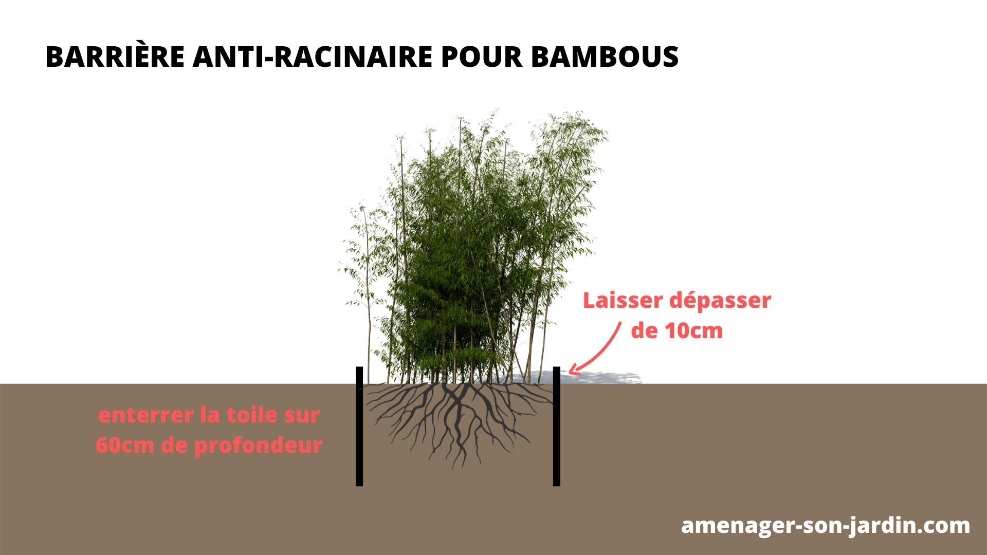 schéma barrière anti racine pour bambous