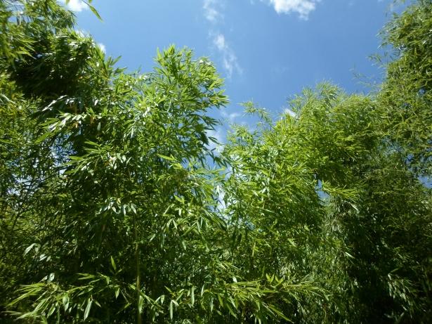 haie de bambous pour cacher un vis à vis en hauteur