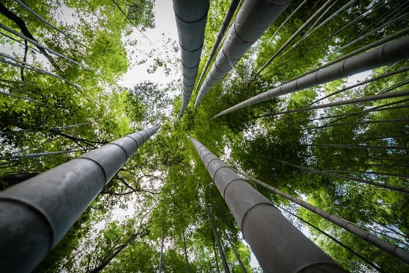 bambous cannes noires décoratifs