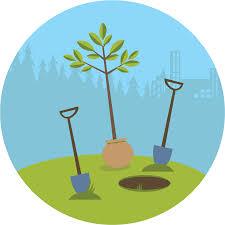 ne pas planter trop profond pour ne pas que la plante meurt
