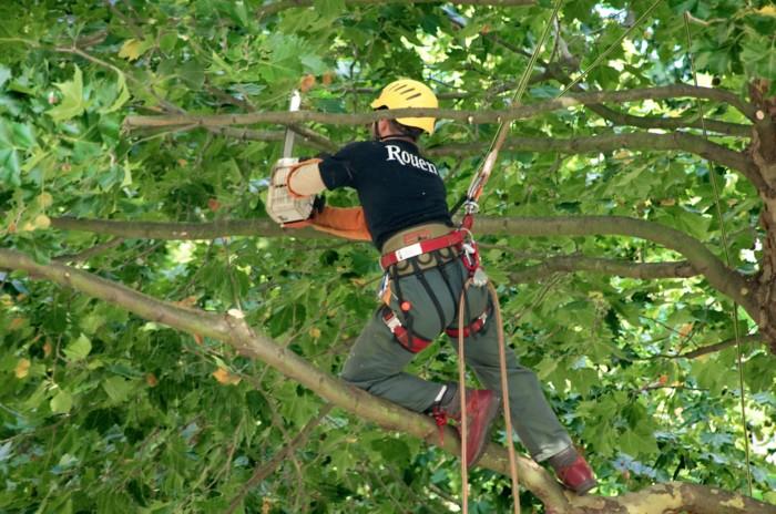 choisir un jardinier paysagiste élagage arbre
