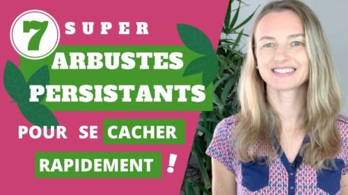 conseils de paysagistes pour plantation d'arbustes persistants