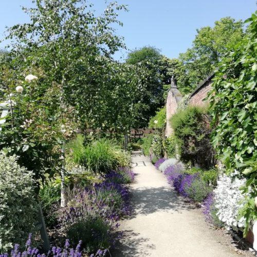 aménagement de jardin avec des lavandes