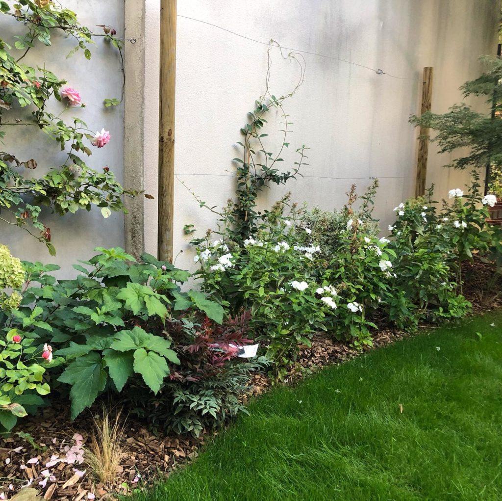 distance entre 2 plantes grimpantes pour décorer un mur