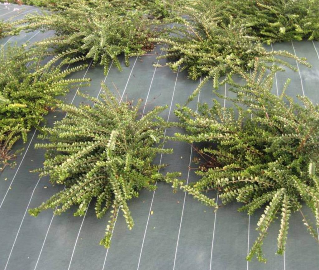 aménagement de jardin avec une toile de paillage verte