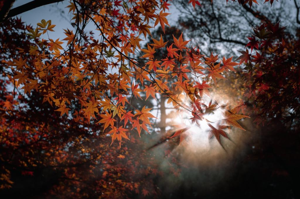 un jardin d'ombre avec des érables du japon colorés