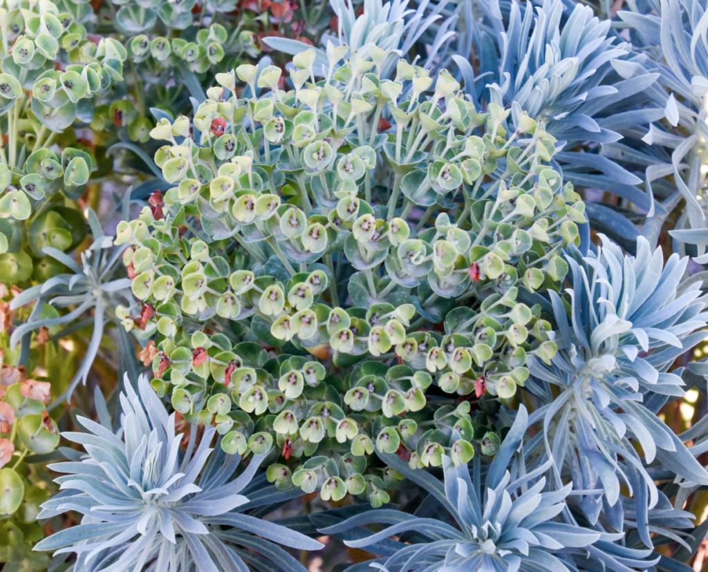 belle plante persistante pour massif