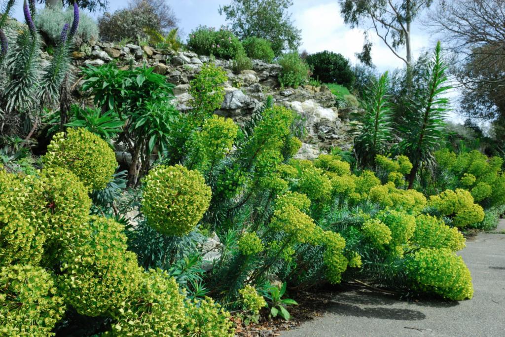 plante persistante pour le plein soleil