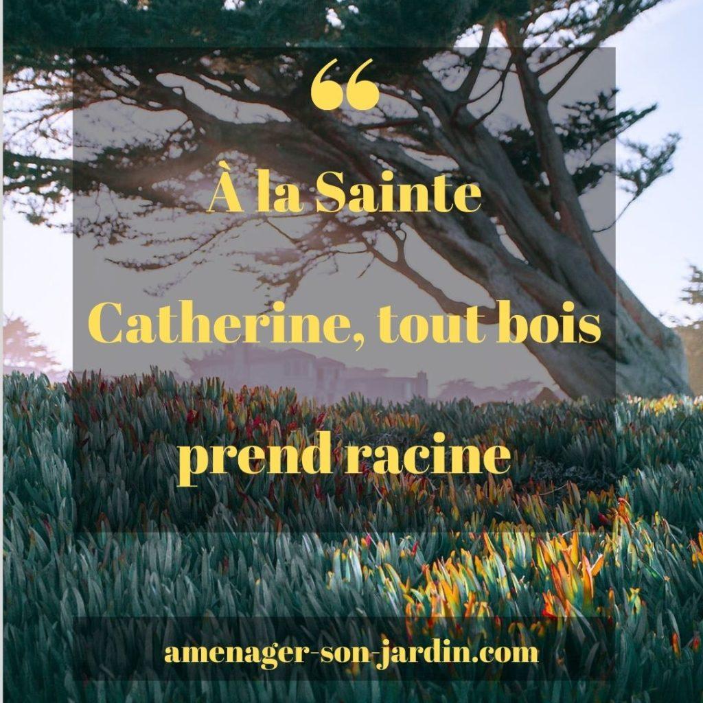 planter à la sainte Catherine
