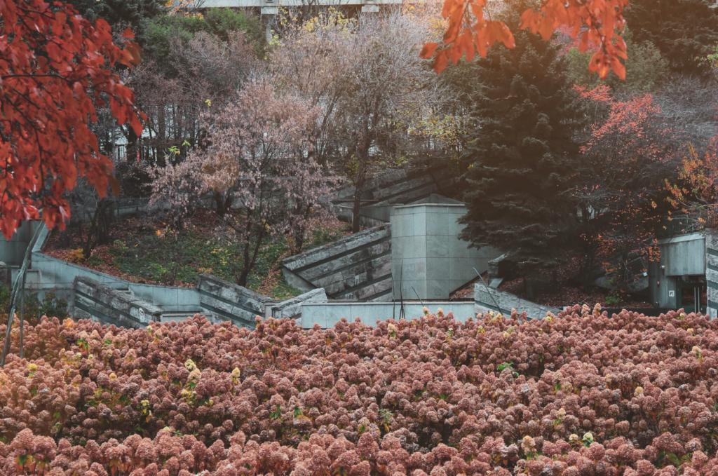 parc avec massif d'hortensia paniculata