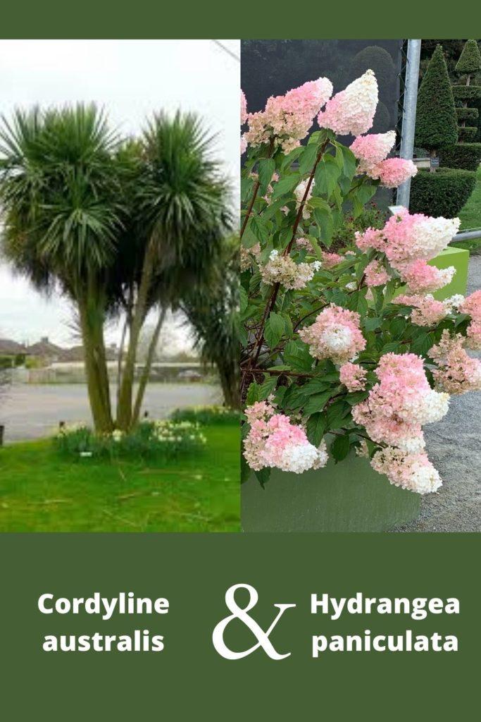 association végétale avec plante à fleur rose