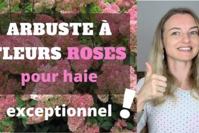 arbuste à fleurs roses pour haie