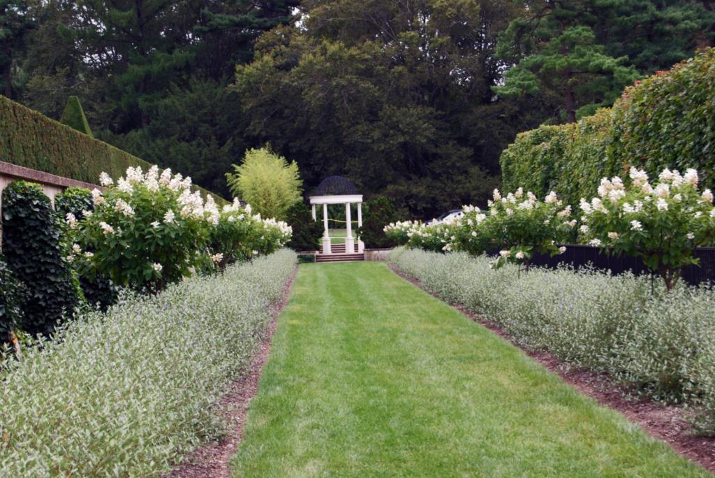 arbuste fleurs rose pour jardin romantique