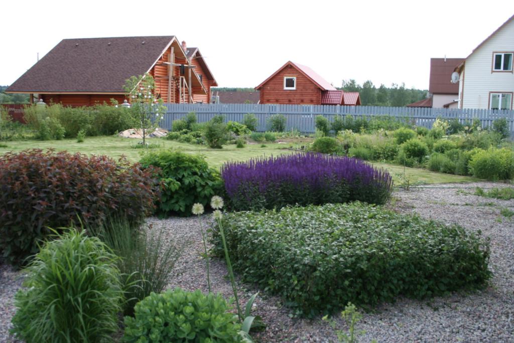 plante vivace violette