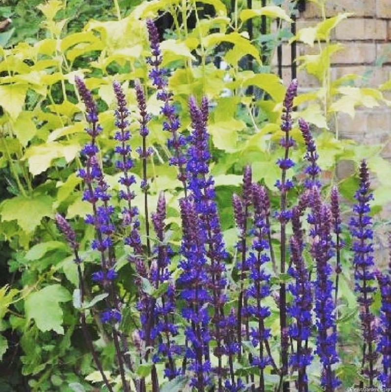plante vivace fleurie