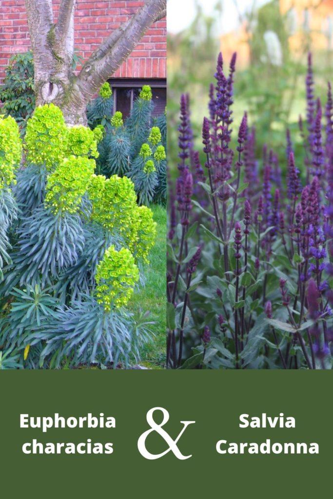 association plante vivace