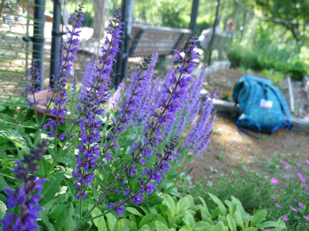 plante vivace décorative
