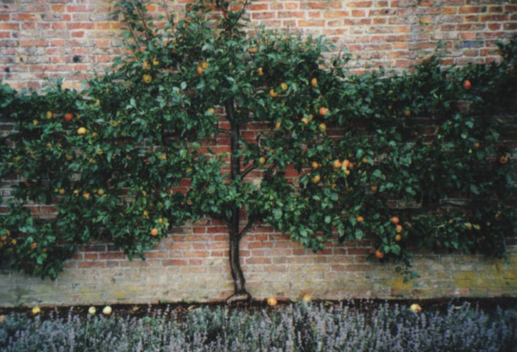 petit arbre fruitier décoratif pour petit jardin