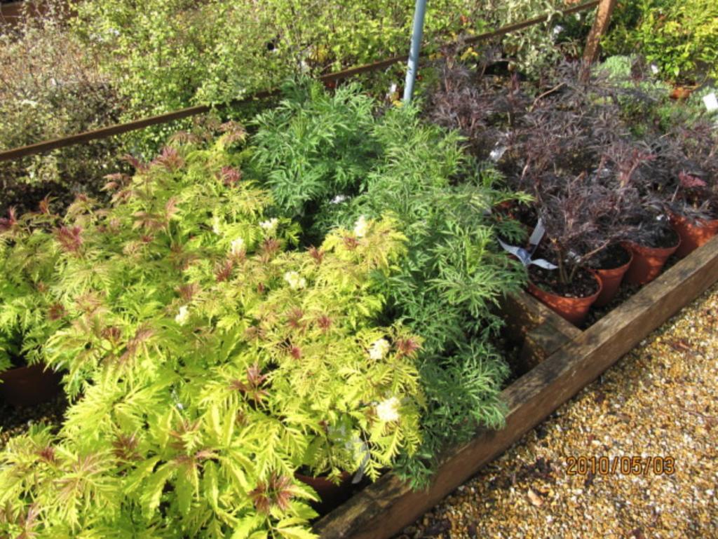 plantes de haie feuillage coloré